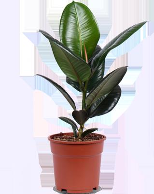 Eerste hulp bij kamerplanten: deze groenblijvers passen het beste bij jouw persoonlijkheid 150*150