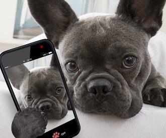 instagram_huisdieren_populair