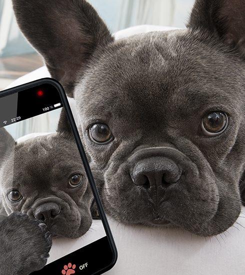 Hoe maak je je huisdier beroemd op Instagram?