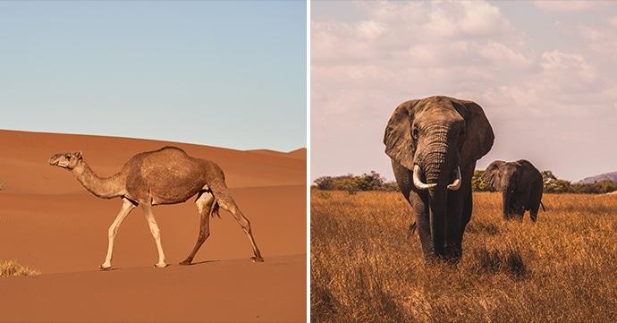 Werelddierendag: top 7 urban legends over dieren
