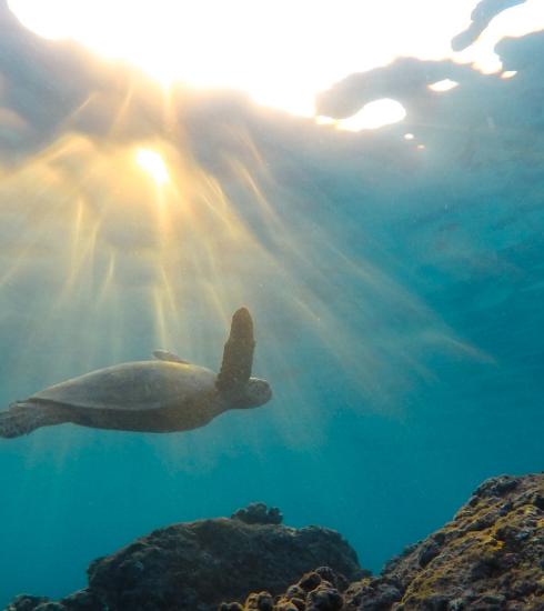 Hier kan je de onderwaterwereld ontdekken in een onderzeeër