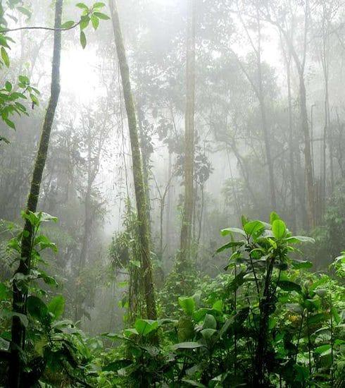 #PrayForAmazonia: De longen van de wereld staan in brand