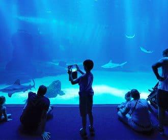nausicae_aquarium_europa_mc