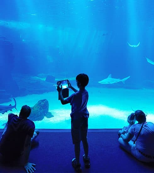 In beeld: dit is Nausicaá, het grootste aquarium van Europa