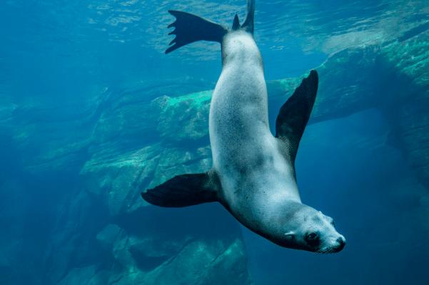In beeld: dit is Nausicaá, het grootste aquarium van Europa 150*150