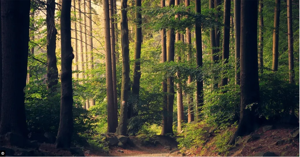 Sylvotherapie: waarom niet eens een bosbad nemen?
