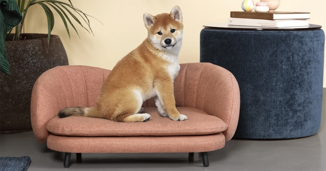 Weekendtip: in deze meubelzaak krijg je een gratis fotoshoot van je viervoeter