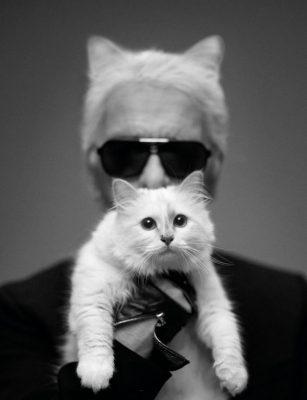 Hoe zou het nog zijn met de wereldberoemde kat Choupette? 150*150