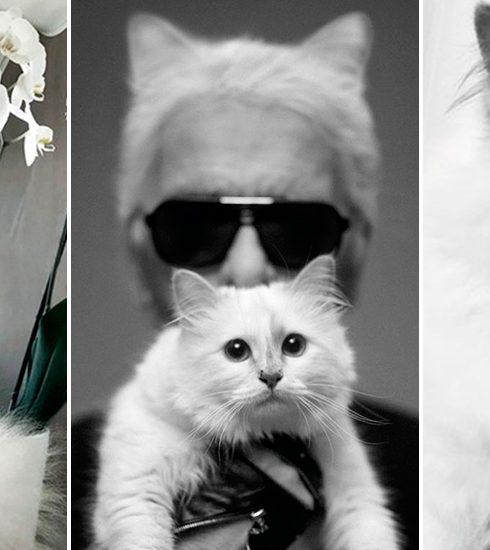 Hoe zou het nog zijn met de wereldberoemde kat Choupette?