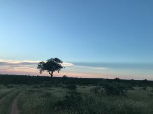 Reisverslag: Zuid-Afrika voor beginners - 4