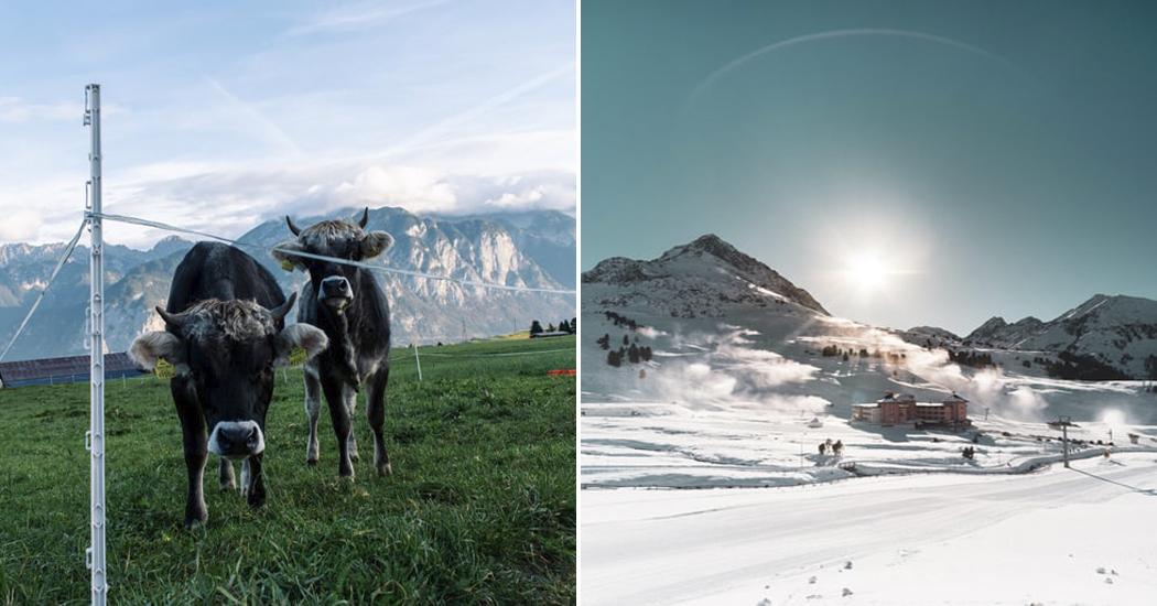 Op stiltevakantie in Noord-Tirol: koebellen en mindfulness