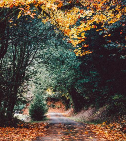 Onze tips voor de mooiste boswandelingen in België