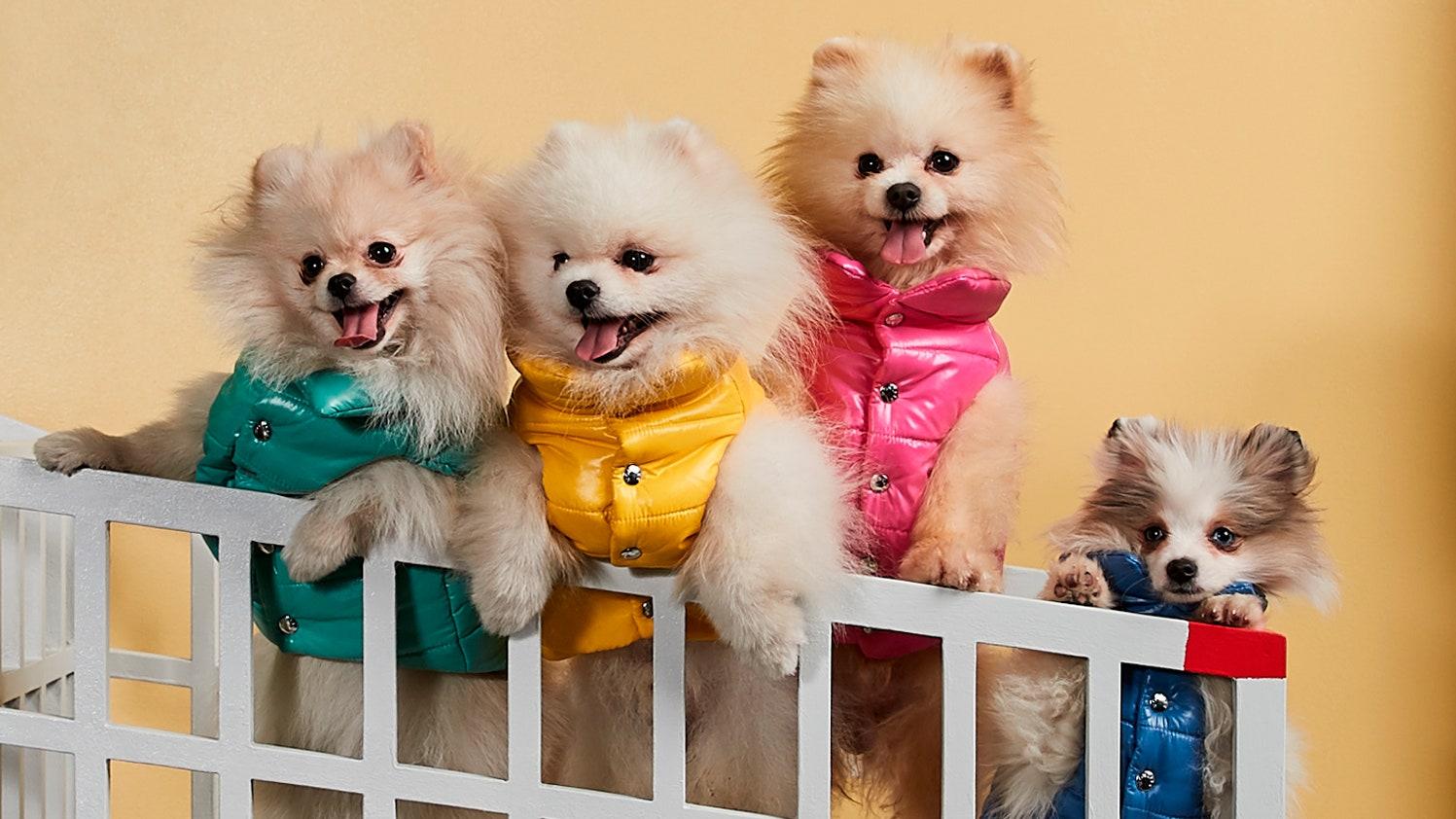 Petcore: de Moncler collectie voor Honden
