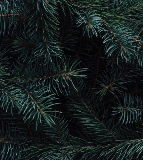 Hier koop je een kerstboom en steun je tegelijkertijd een goed doel