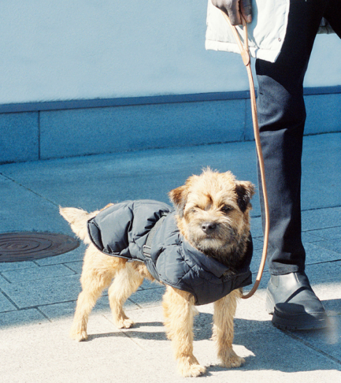 Petcore is de volgende hippe subcultuur (voor honden)