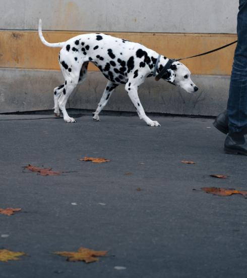 Nieuwe campagne GAIA moet impulsaankopen dieren tegengaan