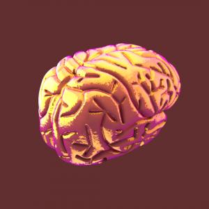 Studio Brein