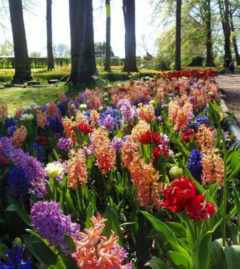 Weekendtip: bloemenfestival Floralia Brussels