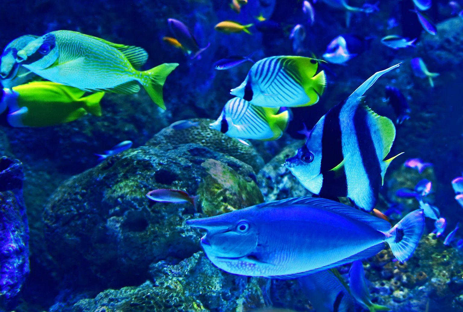 World Oceans Day: 5 makkelijke manieren om de oceanen te beschermen - 2
