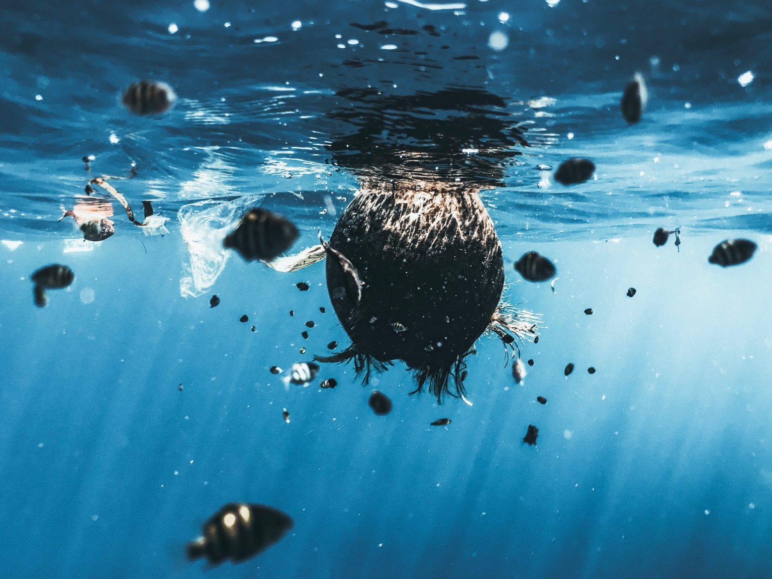 World Oceans Day: 5 makkelijke manieren om de oceanen te beschermen - 1