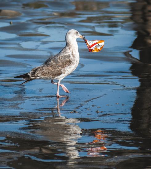 Van zwerfvuil is plastic de grootste vervuiler van de oceaan