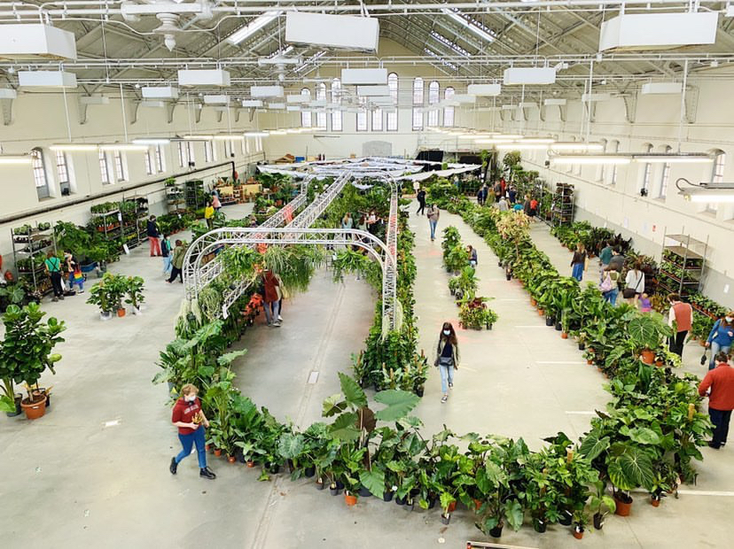 Meer dan 10.000 planten op nieuwe editie van PUP in Elsene - 1